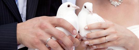 Felicita a los recién casados su nuevo enlace con estas tarjetas personalizadas por ti mismo.